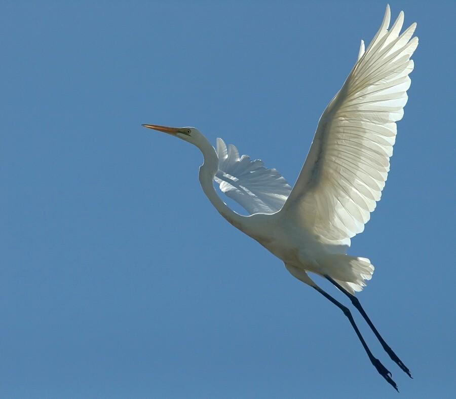 A White Heron Analysis A White Heron Symbolism A